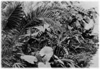 Image courtesy University of Pennsylvania archives