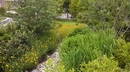 Shoemaker Green Rain Garden